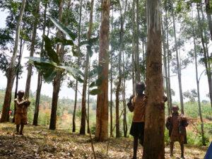 ブルンジ共和国の気候について【元子ども兵達が社会復帰するための職業訓練施設「オンズ自立支援センター」】